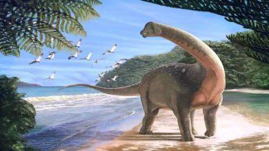 Photo of ไดโนเสาร์สายพันธุ์ใหม่ที่พบในออสเตรเลียประกาศเป็นทวีปที่ใหญ่ที่สุด |  ไดโนเสาร์ที่ใหญ่ที่สุดในโลก ถูกค้นพบในประเทศนี้ นี่คือความยาว