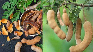 Photo of มะขามมีประโยชน์ในการลดน้ำหนัก รู้นี่ ประโยชน์ต่อสุขภาพของมะขามเปียก |  ประโยชน์ของมะขาม : มะขามทรงประสิทธิภาพในการลดน้ำหนักอย่างรวดเร็ว ช่วยเพิ่มภูมิคุ้มกัน รู้คุณประโยชน์ที่น่าอัศจรรย์
