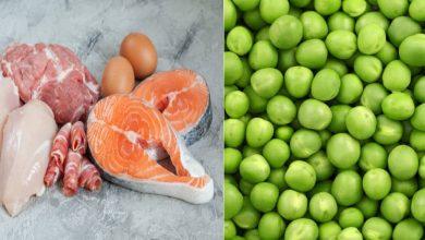 Photo of กินอาหารมังสวิรัติสี่ชนิดนี้เพื่อโปรตีนเพื่อสุขภาพร่างกายที่แข็งแรง janiye protein ke liye shakahari khana samp |  อาหารมังสวิรัติที่อุดมด้วยโปรตีน: กินอาหารมังสวิรัติ 4 อย่างนี้เพื่อให้ได้โปรตีนจะเหลือเนื้อและปลา