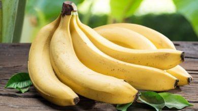 Photo of ประโยชน์ของกล้วยสุขภาพที่ดีขึ้นด้วยกล้วยกินกล้วยในอาหารเช้า brmp |  ประโยชน์ของกล้วยเพื่อสุขภาพ : กล้วยวันละ 1 ลูก ทำสิ่งมหัศจรรย์เพื่อสุขภาพได้ แค่รู้เวลาที่เหมาะสมในการบริโภค