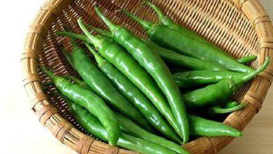 Photo of วิธีเก็บพริกเขียวให้อยู่นาน รู้นี่ How to Keep Chilli Fresh brmp |  ประโยชน์ของพริกเขียว : เก็บพริกเขียวแบบนี้ให้สดหลายวัน ให้คุณประโยชน์มากมายต่อสุขภาพ