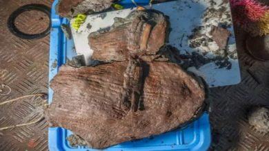 Photo of ตะกร้าเก่า 2400 ปีเต็มไปด้วยผลไม้ที่พบในเมืองอียิปต์ |  พบตะกร้าอายุนับพันปีในอียิปต์ เมื่อลืมตานักวิทยาศาสตร์ก็ลืมตาขึ้น